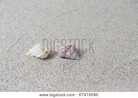Closeup The Sand And Shells