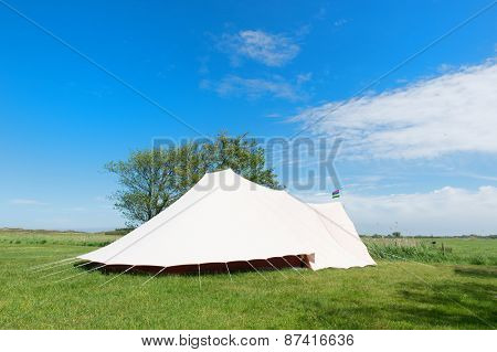 Landscape Camping with tent in meadows with cows