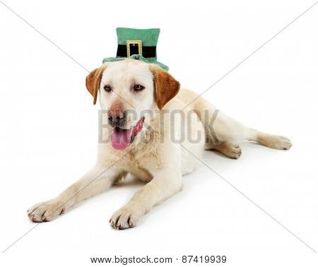 Cute dog in costume, isolated on white