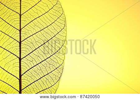 Skeleton leaf on yellow background, close up