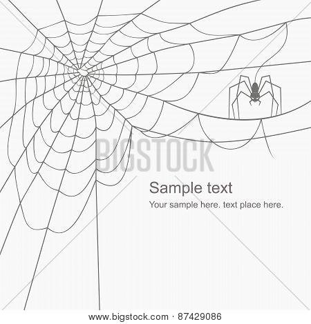 vector cobweb