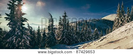 Morning In Carpathian Mountains. Dragobrat