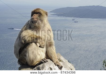 Monkey with Sea Background in Gibraltar