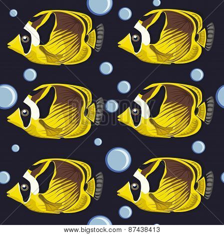 seamless pattern. tropical fish.