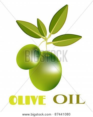 Modern, isolated, olive, green twig with olives and leaves, text Olive Oil, white background