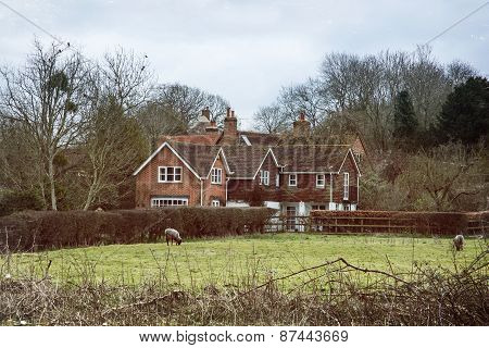 Country House And Sheep In England