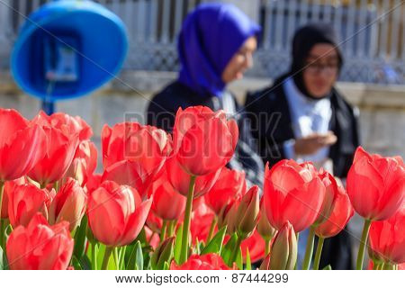 Pink tulips close up Istanbul street
