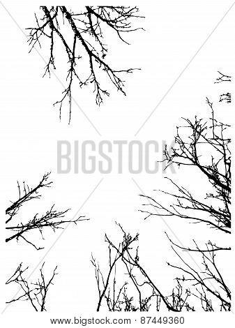 Grunge Branches Frame