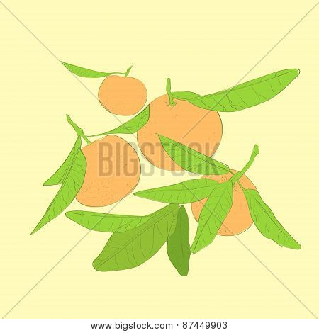 mandarin cirus fruit with green leaves vector
