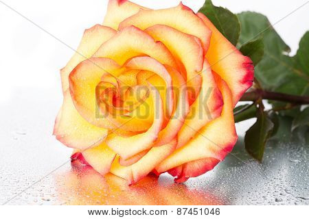 Yellow-red Rose On A Silvery Background With Water Drops