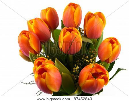 Isolated orange tulips in springtime