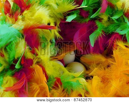Boiled chicken eggs in colorful feathers