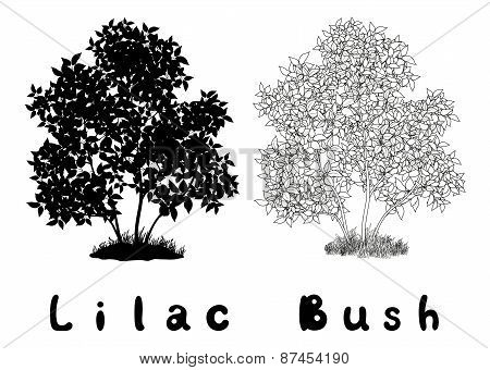 Lilac Bush Contours, Silhouette and Inscriptions