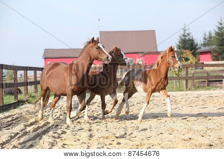 Mare With Two Foals Running
