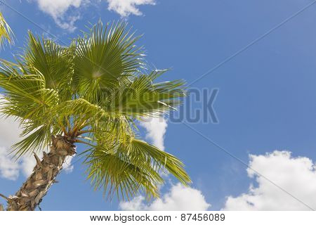 Majestic Tropical Palm Trees Against Beautiful Blue Sky and Clouds.