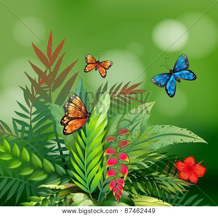 Scene of nature with butterflies and fern