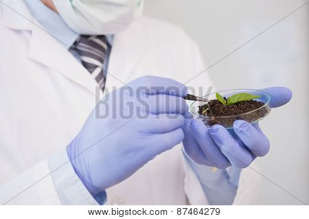 Scientist analysing plant in petri dish in the laboratory