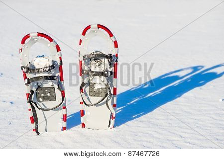 Snowshoes Stuck In The Snow And Plenty Of Natural Light