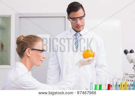 Scientists doing experimentations on orange in the laboratory