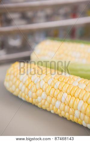 Corn on the cob in laboratory