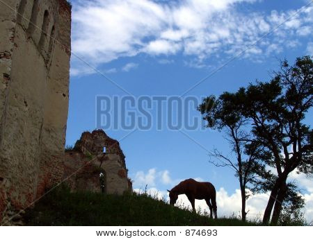 Wild Horse And Ruins