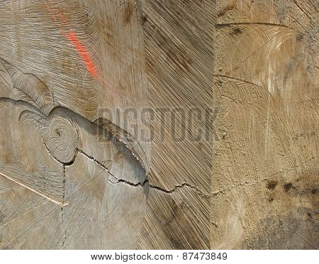 Detail Of A Cut Log Tree With Spray Mark