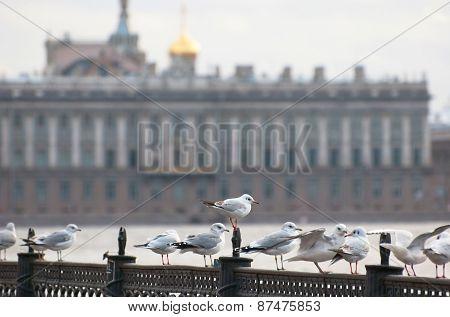 Saint-Petersburg. Russia. Seagulls on the Neva River