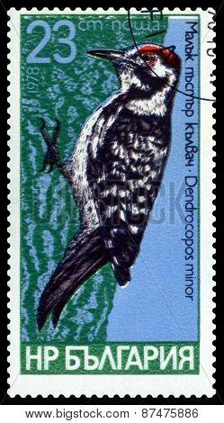Vintage  Postage Stamp.  Bird, Lesser Spotted.