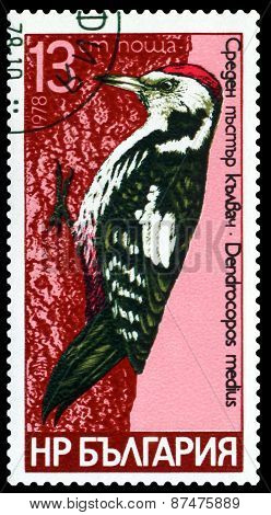 Vintage  Postage Stamp.  Bird, Middle Spotted.