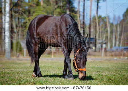 brown horse walking on a field
