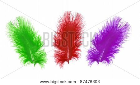 Colorful Feather Over White Background