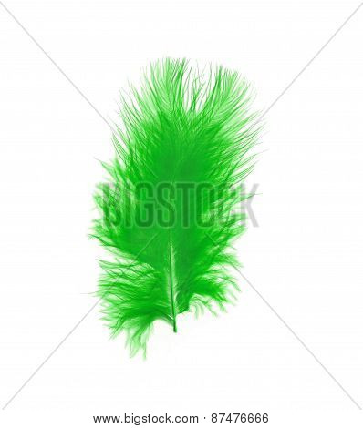 Green Feather Over White Background