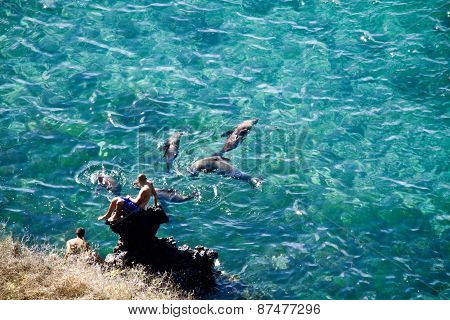 Unidentified tourists enjoying the ocean with crystal clear water and swimming sea lions in San Cris