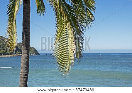 Pacific Ocean Coast With Palm Tree