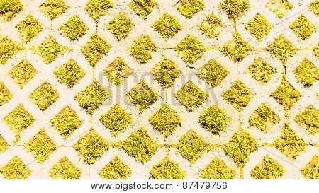green grass abstract