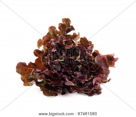 Red Lettuce, Red Oak Leaf On A White Background