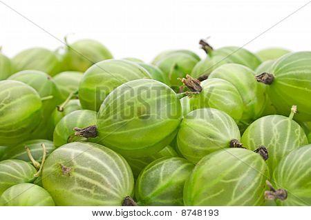 Green Gooseberry
