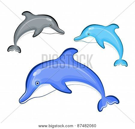 Swimming Dolphin isolated on background