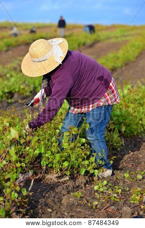 Woman Farm Worker