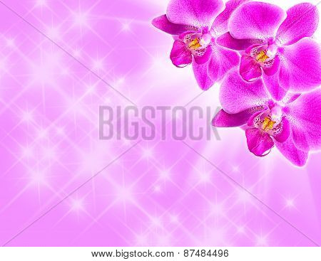 Pink Orchid On Blue
