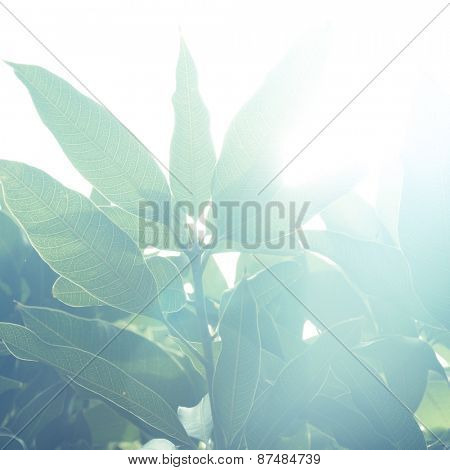 Lush green plant against bright sunlight. A beautiful abstract nature background.