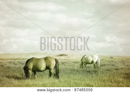 Vintage Wild Horses In Nature