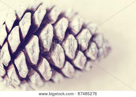 Pine Cone Macro Vintage Blur Background
