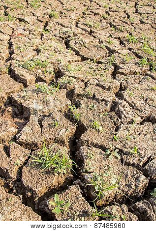 Cracked Soil During Drought.