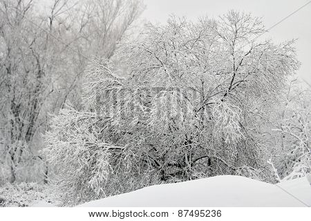 Fresh Snow Covered Tree