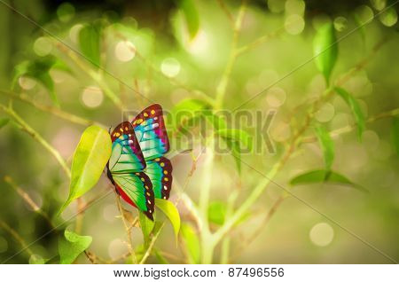 Colorful butterfly on the branch
