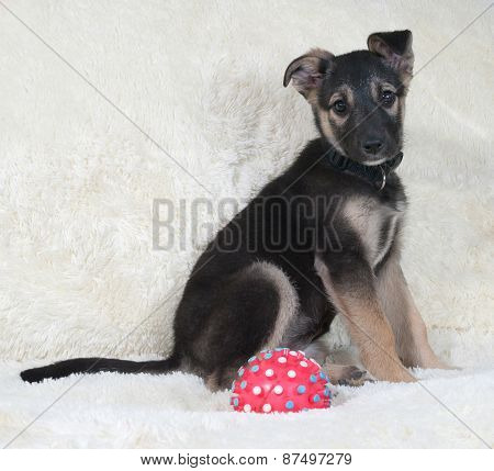 Small Black And Yellow Puppy Sitting On White Fur Sofa
