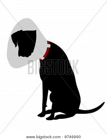 Cão com Ruff