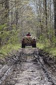 stock photo of lumber  - A rear view of a tractor hauling lumber out of the woods along a dirt path - JPG