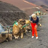 stock photo of camel  - woman ejnjoys looking to camels for a camel ride in Timanfaya National Park - JPG